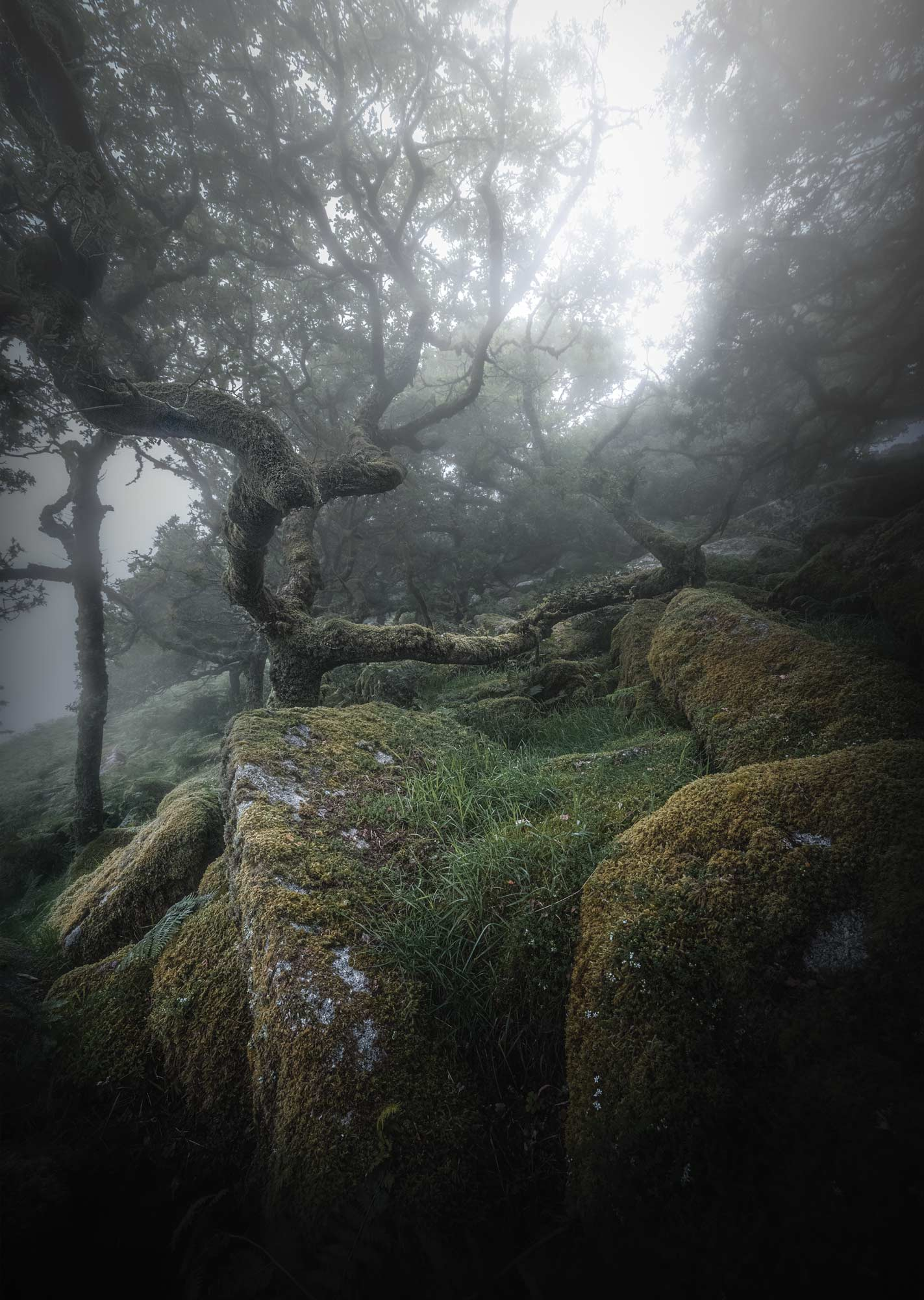 Wistman's Wood | High Glow
