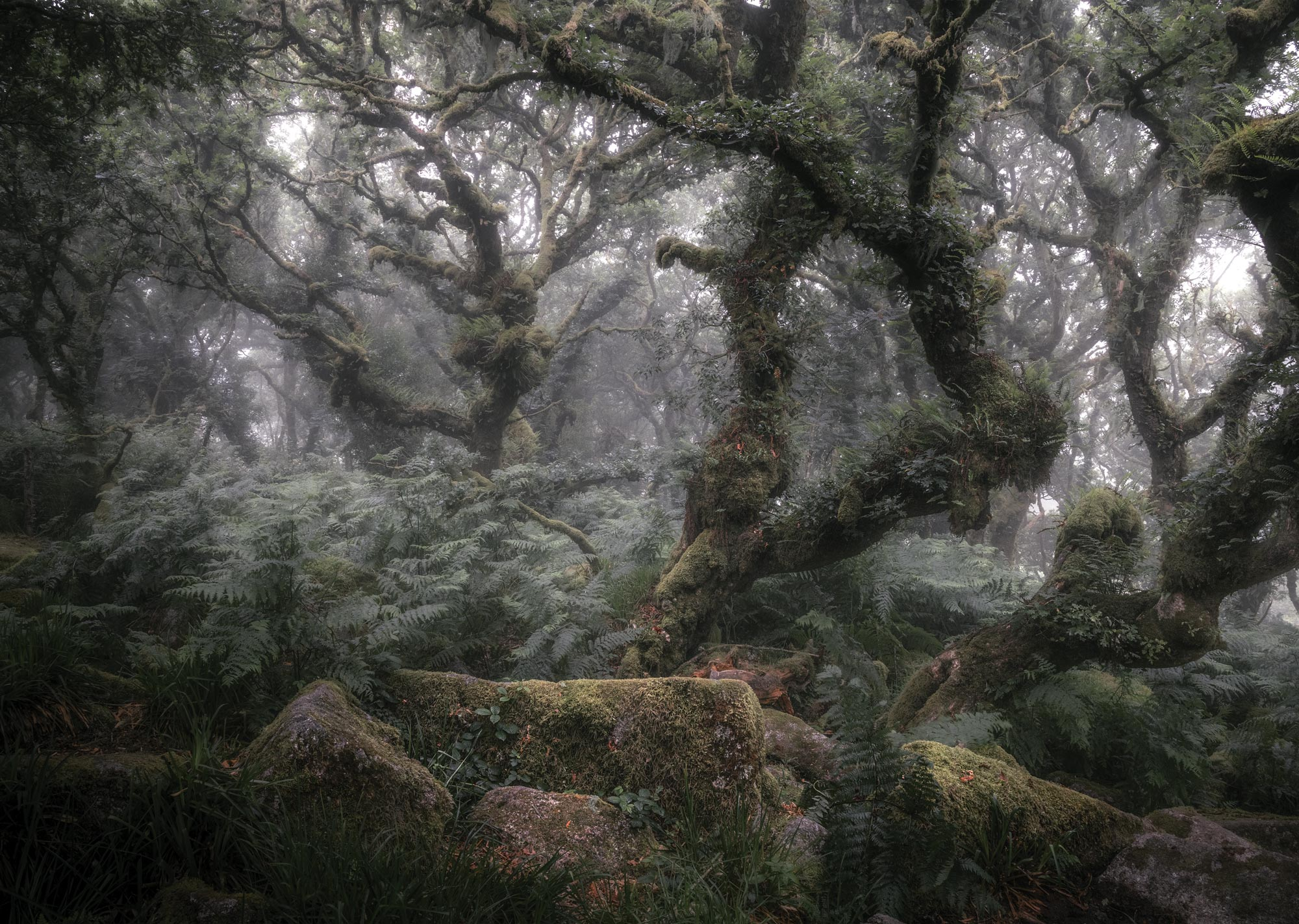 Wistman's Wood | Little Eccentrics