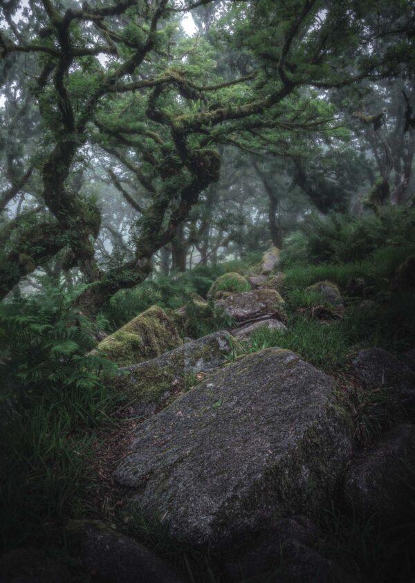 Wistman's Wood - Stone Row-A3